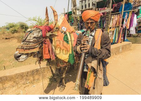 GOA, INDIA - MAR 1, 2017: Indian street musician playing music and making show with a cow on market street on March 1, 2017. Near 5 million tourists visit Goa annually