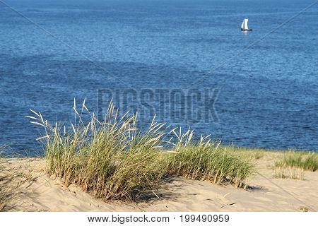 Sand Dunes Grass