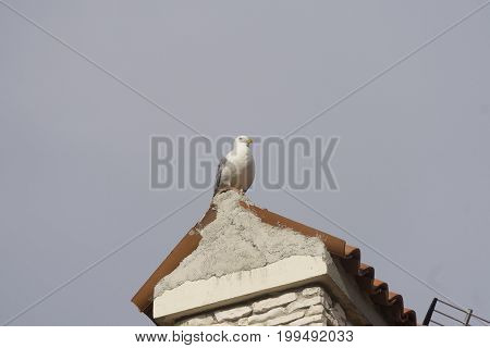 The seagull is sitting on the roof