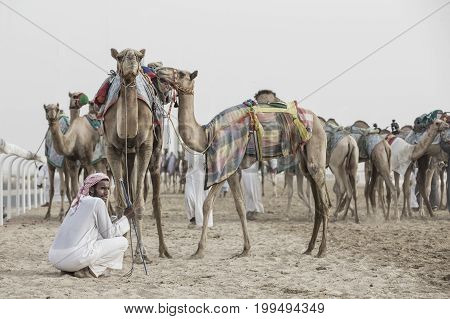 Man With His Camels In Rub Al Khali Desert At The Empty Quarter, In Abu Dhabi, Uae