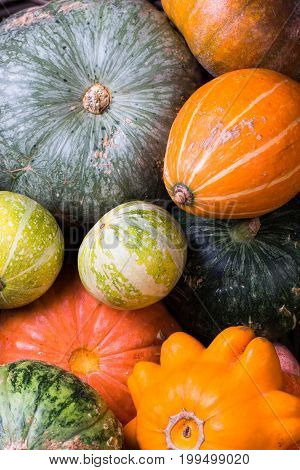 Varieties of pumpkins and squashes collection. Autumn harvest concept
