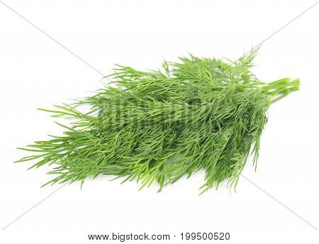 Sprig of fresh dill isolated on white background