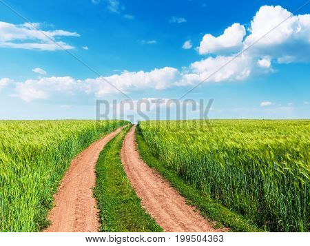 Scenic summer landscape background view of green rural cultivated wheat farm field winding road and blue sunny sky with clouds