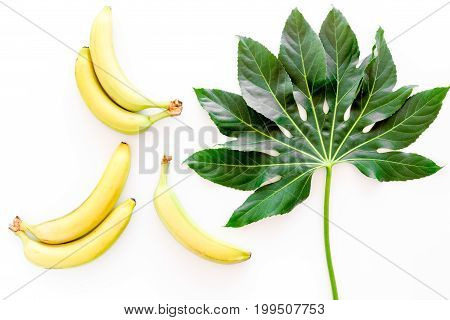 Tropical plants. Huge leaves and bananas on white background top view.