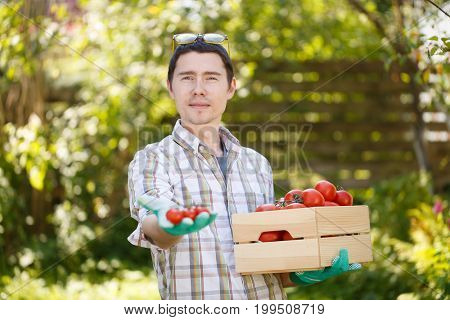 Agronomist with box of tomato