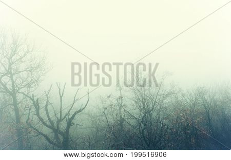 Artistic image of a mysterious winter forest with fog