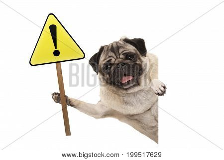 smiling pug puppy dog holding up yellow warning attention sign with exclamation mark isolated on white background