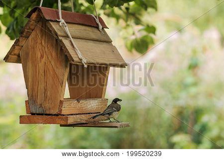 Bird tit feeding at backyard feeder hanging on tree