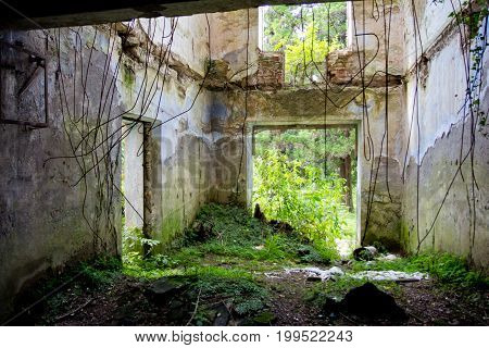 Destroyed by war,overgrown ruins of apartment house in Tquarchal, Abkhazia