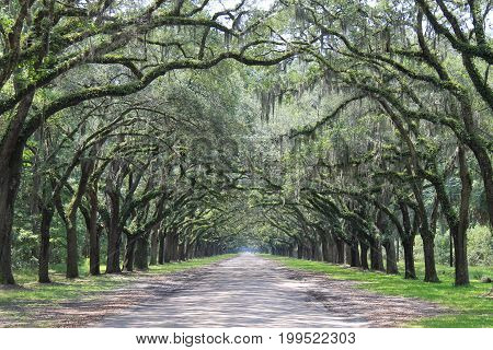 A Photo Taken From A State Park In Savannah, Georgia