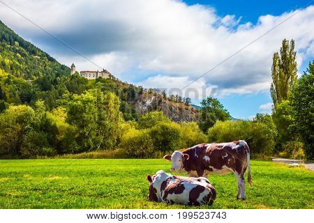 Warm autumn in the Dolomites, the Val de Funes. The concept of ecological tourism. Well-fed cows graze on the green meadows