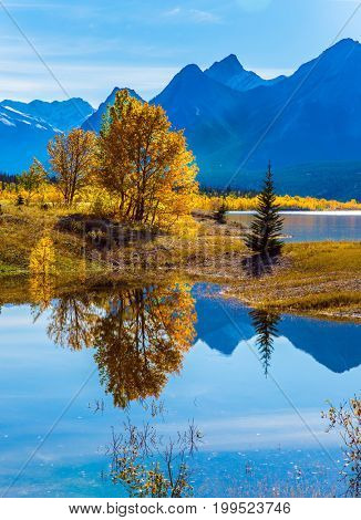 Sunny autumn day in the Rocky Mountains of Canada. The concept of ecological and active tourism. The artificial Abraham lake reflects light cirrus clouds and trees