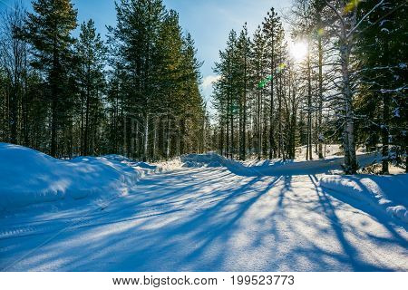 Snowy winter in the Arctic, Lapland. The dim northern sun illuminates the coniferous forest. The concept of active and extreme tourism. In deep snow there are blue shadows