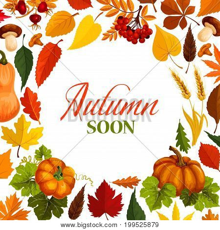 Autumn poster with frame of fall season nature. Autumn leaf, fall harvest pumpkin vegetable, foliage of maple and forest tree, acorn, mushroom, rowan and briar berry, wheat ear for banner design