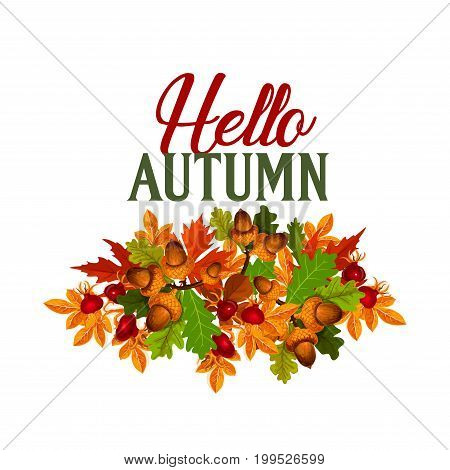 Hello Autumn poster or greeting card of maple leaf or rowanberry foliage and oak acorn, dog-rose berry or fruit and aspen or chestnut leaves. Vector design for autumn seasonal holiday