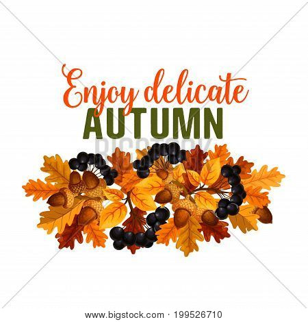 Enjoy Autumn seasonal greeting card of oak acorn and rowan berry harvest. Vector isolated fall holiday quote design template, autumn maple, birch or chestnut and poplar orange or yellow leaf foliage