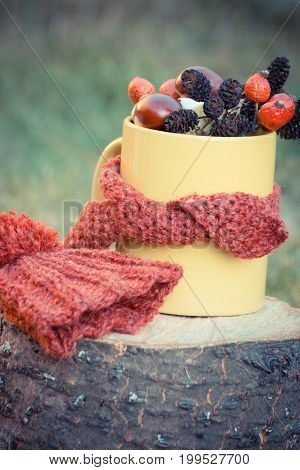 Vintage Photo, Cup With Autumn Decoration Wrapped Scarf And Woolen Cap On Wooden Stump