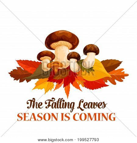 Autumn season is coming poster or greeting card of falling leaves and forest mushroom harvest. Vector fall time cep porcini and chanterelle on maple, birch or chestnut leaf for autumn seasonal holiday