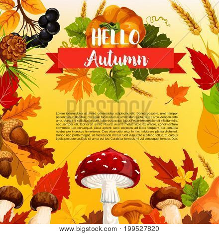 Hello autumn poster template with fall leaf and forest nature. Orange and yellow foliage with harvest pumpkin vegetable and wheat banner, framed by forest mushroom, acorn and berry for autumn design