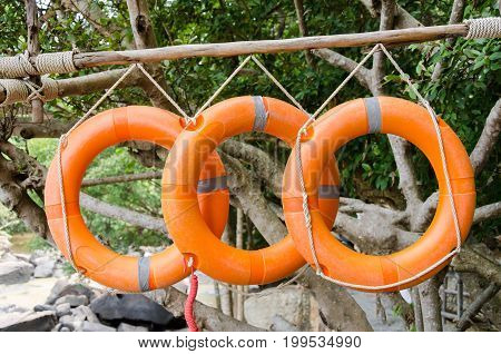 Lifebuoy lifebelt or swim ring hanging on tree near the waterfall