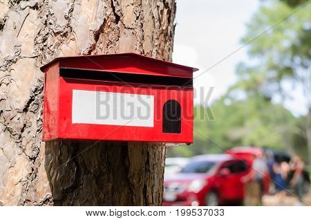 Red mail box hang on pine tree