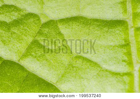 Macro Of Plant Leaf Texture Nature Background