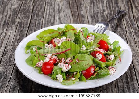 Vegetarian Salad Of Greens And Cottage Cheese