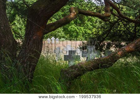 A View To Old Stone Crosses And A Pine Tree In The Grass At The Old German Cemetery Of The Second Wo