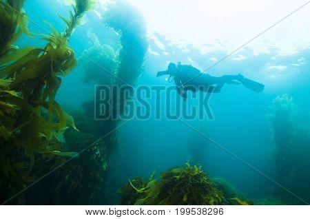 Scuba Diver off San Clemente island, CA