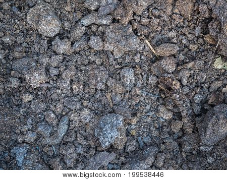 Close-up dry humus. Cultivated soil, dirt ground, brown land background. Organic agriculture, gardening. Environmental texture, pattern. Mud on field close-up.