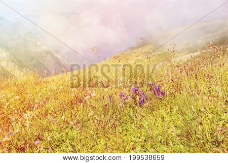 Toned Panoramic View Over The Carpatian Mountains, And A Big Fog Cloud At The Background And Purple