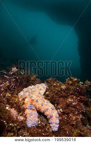 Sea star near underwater arch in Pacific Ocean, California