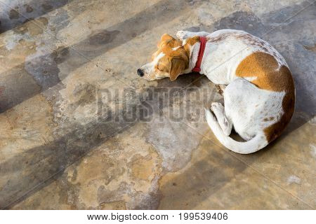 beautiful animal, puppy sunbathing on the cement floor