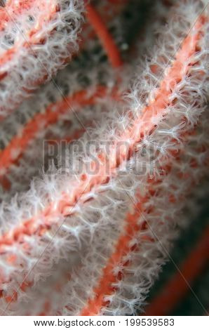 Close-up of a Sea Fan in the Pacific Ocean