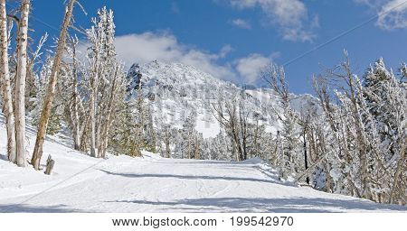 Snow-blown wilderness with trees in Mammoth Mountain, CA.