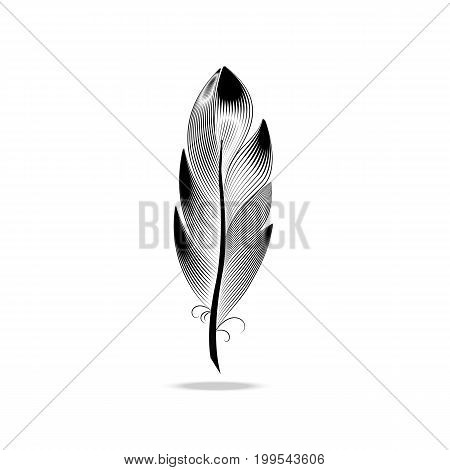 A large wide black and white contour feather. Style engraving