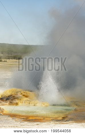 Spasm Geyer erupting and fuming in Fountain Paint Pots area in Yellowstone National Park, Wyoming