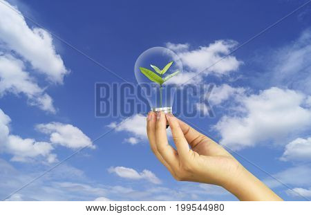 hand holding bulb with small tree in sky concept in save World environment day reforesting eco bio arbor CSR ESG ecosystems reforestation concept