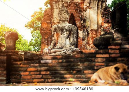 Ayutthaya Old Buddha Statue And Blurred Vagrant Dog In Wat Mahathat Temple. Ayutthaya Historical Par