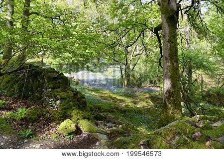 Lane near Elterwater in the English Lake District