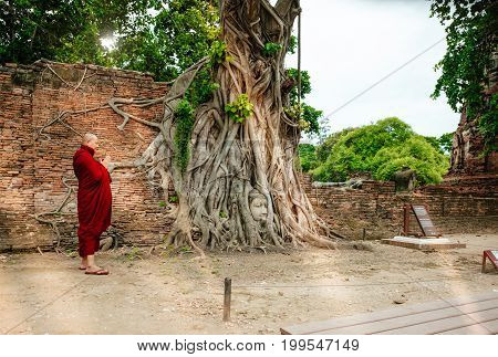 Buddhist Monk Worshiping Stone Head Buddha Statue With Trapped In Bodhi Tree Roots Wat Mahathat (ayu