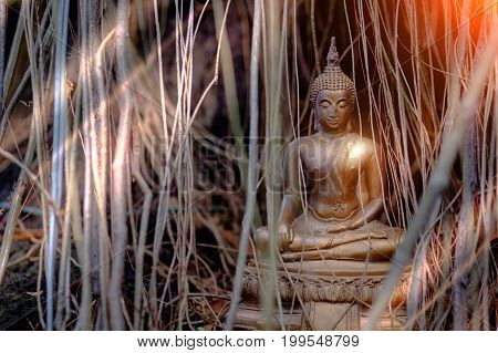Vintage image style of Buddha statue under the big green tree and root Thailand.