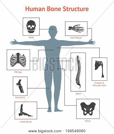 Human Skeleton and Part Set Anatomy Bone on White Background for Card or Poster . Vector illustration