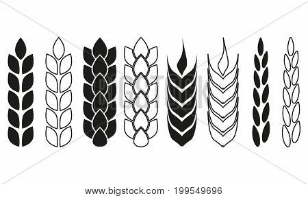 Wheat ears or rice icon set. Crop barley or rye symbols. Agriculture design elements collection. Vector illustration.