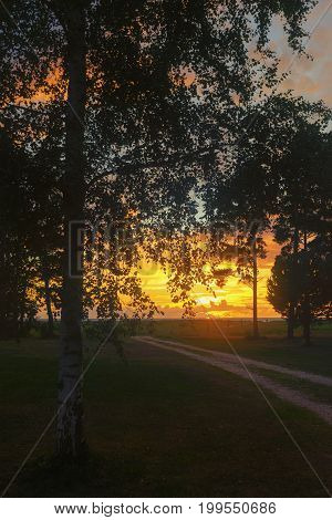 Sunset through birch leaves on a background of a dirt road