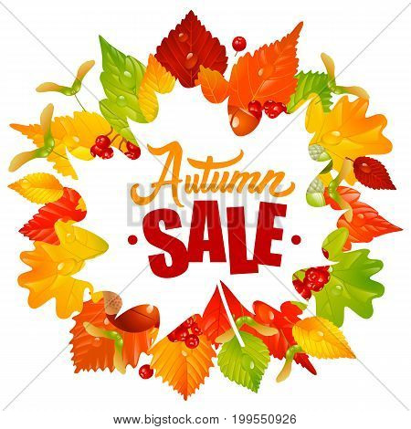 Vector Frame with Fall Leaves Chestnut Acorn and Ashberry. Lettering of Autumn Sale Text. Season Discount Banner Isolated on White Background