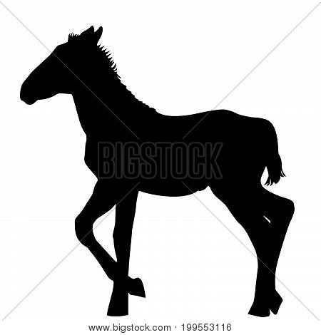 Illustration of a foal silhouette on white background
