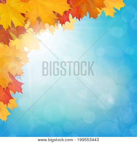 Autumn maple leaves on sun and sky background. Realistic vector illustration.