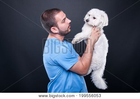 Veterinary Wearing Scrubs Holding Dog For Consultation
