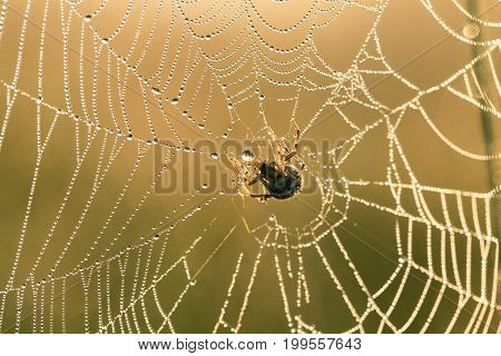 A beautiful closeup of a spider web in marsh. Web with water droplets in morning light. Beautiful marsh scenery closeup.